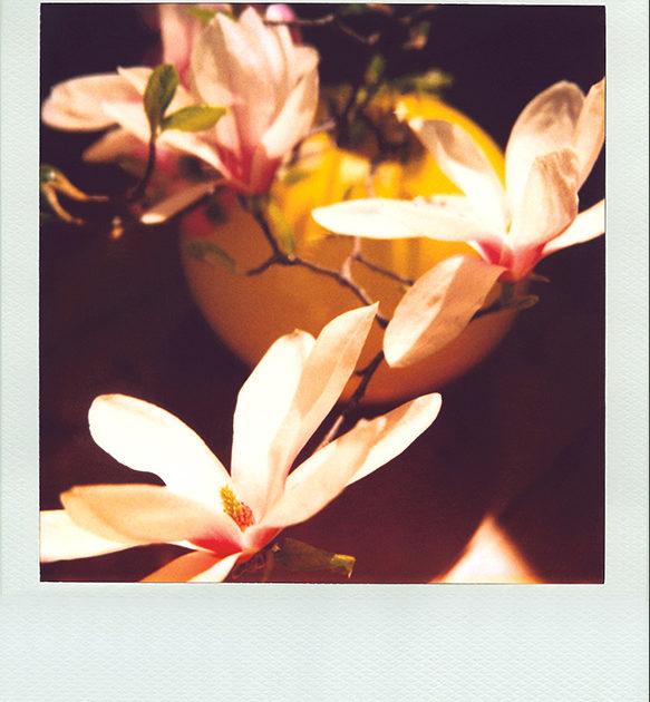 Luisa-Valieri-Magnolia-02