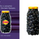 Pago_Ad_True_Colours_Blackcurrant.indd